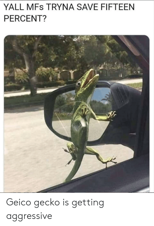 gecko: YALL MFs TRYNA SAVE FIFTEEN  PERCENT? Geico gecko is getting aggressive