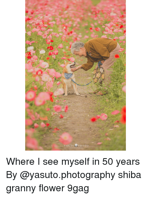 9gag, Memes, and Flower: YASUTO PHOTO  Naturalight Photograp Where I see myself in 50 years By @yasuto.photography shiba granny flower 9gag