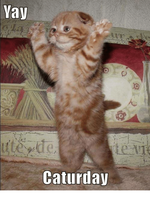 [Image: yay-caturday-7048171.png]