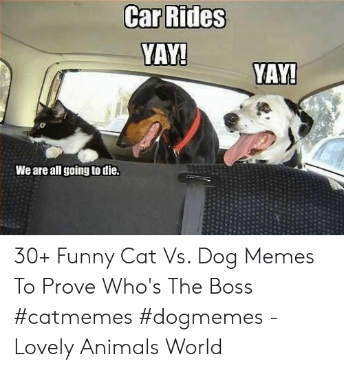 funny cat: YAY!  YAY!  We are all going to die. 30+ Funny Cat Vs. Dog Memes To Prove Who's The Boss #catmemes #dogmemes - Lovely Animals World