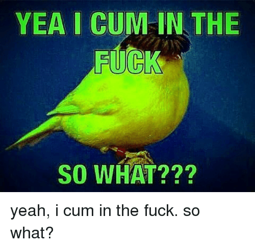 Cum, Memes, and Yeah: YEA I CUM IN THE  SO WHAT??? yeah, i cum in the fuck. so what?