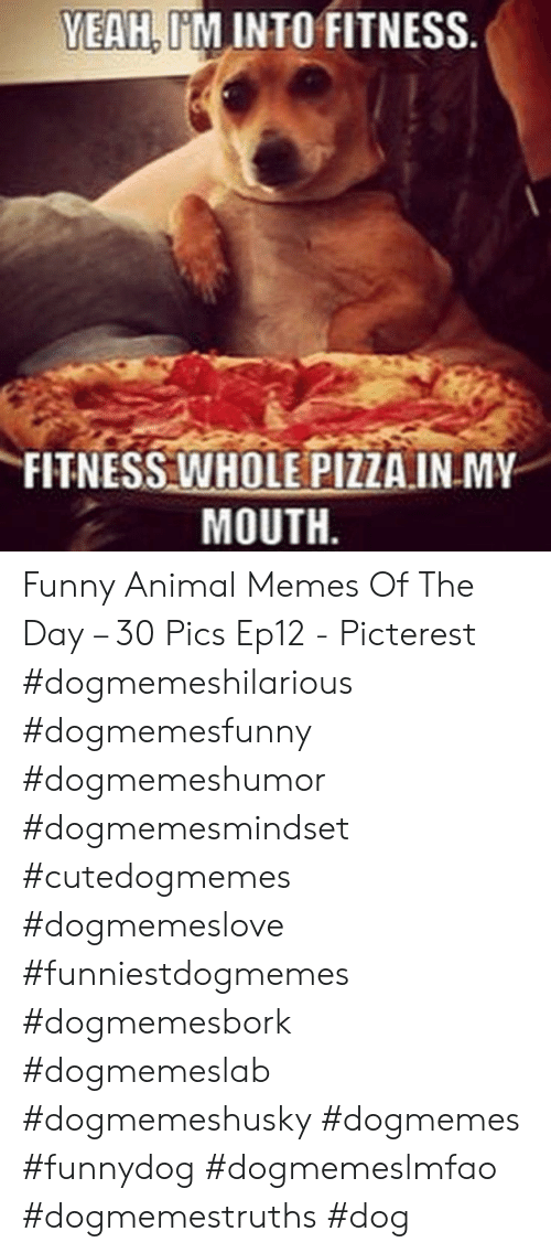 Fitness Whole Pizza: YEAH, I'M INTO FITNESS  FITNESS WHOLE PIZZA.INMY  MOUTH Funny Animal Memes Of The Day – 30 Pics Ep12 - Picterest #dogmemeshilarious    #dogmemesfunny #dogmemeshumor #dogmemesmindset #cutedogmemes #dogmemeslove    #funniestdogmemes #dogmemesbork #dogmemeslab #dogmemeshusky #dogmemes    #funnydog #dogmemeslmfao #dogmemestruths #dog