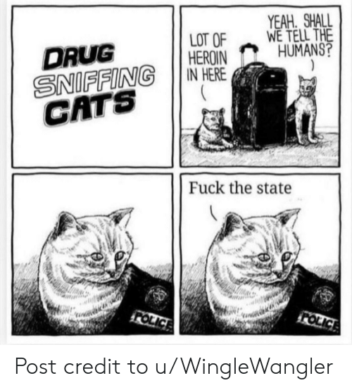 The State: YEAH SHALL  WE TELL THE  HUMANS?  LOT OF  HEROIN  IN HERE  DRUG  SNIFFING  CATS  Fuck the state  FOLICE  FOLICE Post credit to u/WingleWangler