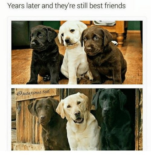 best friend: Years later and they re still best friends  @hilarious ted