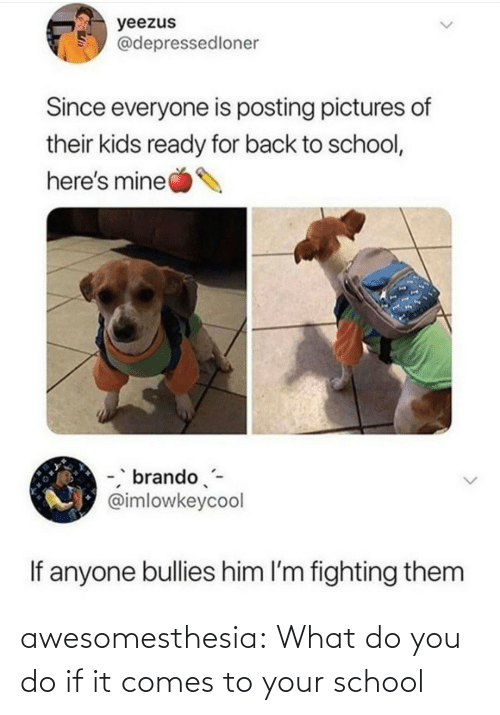 pictures of: yeezus  @depressedloner  Since everyone is posting pictures of  their kids ready for back to school,  here's mine  -, brando-  @imlowkeycool  If anyone bullies him l'm fighting them awesomesthesia:  What do you do if it comes to your school