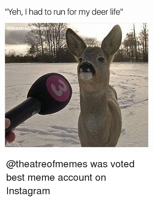 "Deer, Instagram, and Life: ""Yeh, had to run for my deer life""  @theatreG @theatreofmemes was voted best meme account on Instagram"