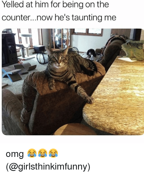 Memes, Omg, and 🤖: Yelled at him for being on the  counter..now he's taunting mee omg 😂😂😂 (@girlsthinkimfunny)