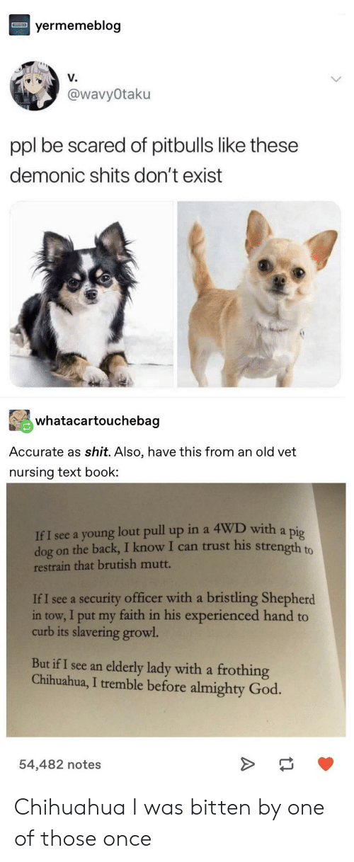 bitten: yermemeblog  V.  @wavyOtaku  ppl be scared of pitbulls like these  demonic shits don't exist  whatacartouchebag  Accurate as shit. Also, have this from an old vet  nursing text book  If I see a young lout pull up in a 4WD with a pig  dog on the back, I know I can trust his strength to  restrain that brutish mutt.  If I see a security officer with a bristling Shepherd  in tow, I put my faith in his experienced hand to  curb its slavering growl  But if I see an elderly lady with a frothing  Chihuahua, I tremble before almighty God.  54,482 notes Chihuahua I was bitten by one of those once