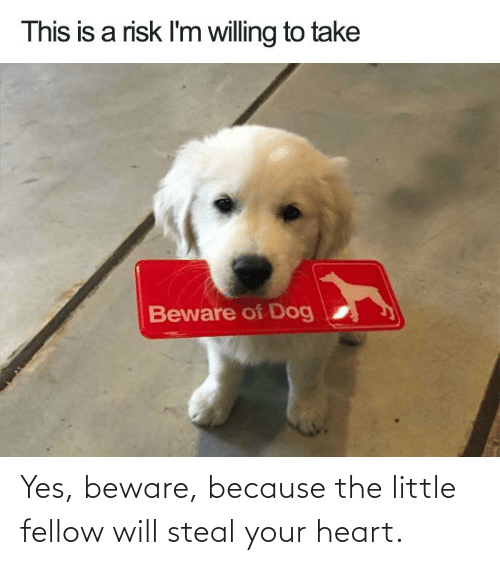 Fellow: Yes, beware, because the little fellow will steal your heart.