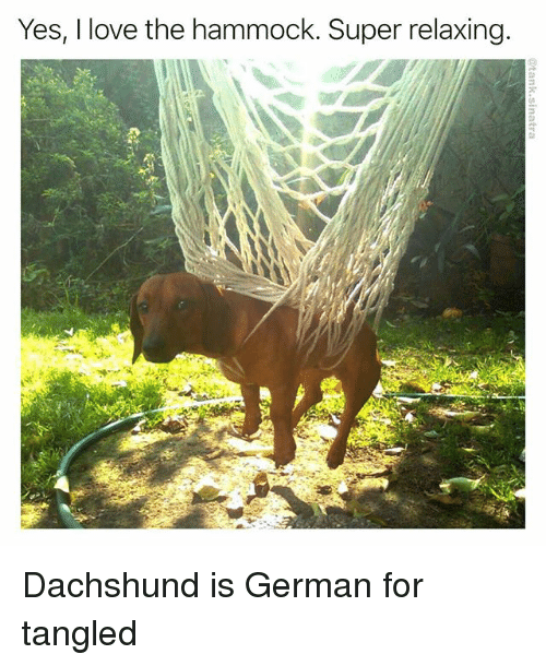 Funny, Love, and Hammock: Yes, I love the hammock. Super relaxing Dachshund is German for tangled