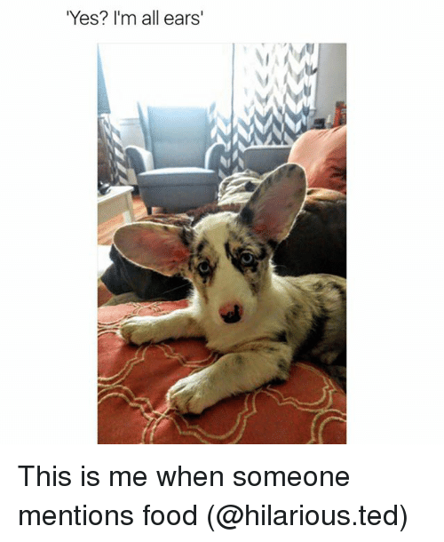 all ears: Yes? I'm all ears' This is me when someone mentions food (@hilarious.ted)