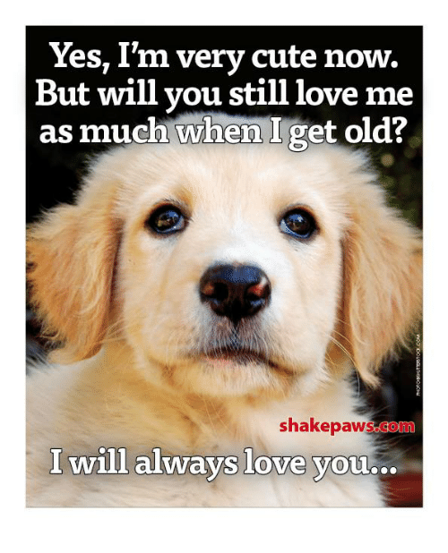 i will always love you: Yes, I'm very cute now.  But will you still love me  as much when I get old?  shakepawsogoni  I will always love you...