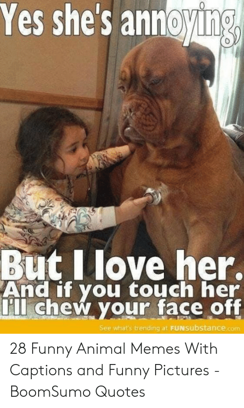funny animal memes: Yes shes annoying  0  But Ilove her.  And if you touch her  ll chew your face off  See what's trending at FUNsubstance.com 28 Funny Animal Memes With Captions and Funny Pictures - BoomSumo Quotes