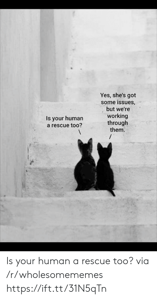 Got Some: Yes, she's got  some issues,  but we're  working  through  them.  /  Is your human  a rescue too? Is your human a rescue too? via /r/wholesomememes https://ift.tt/31N5qTn