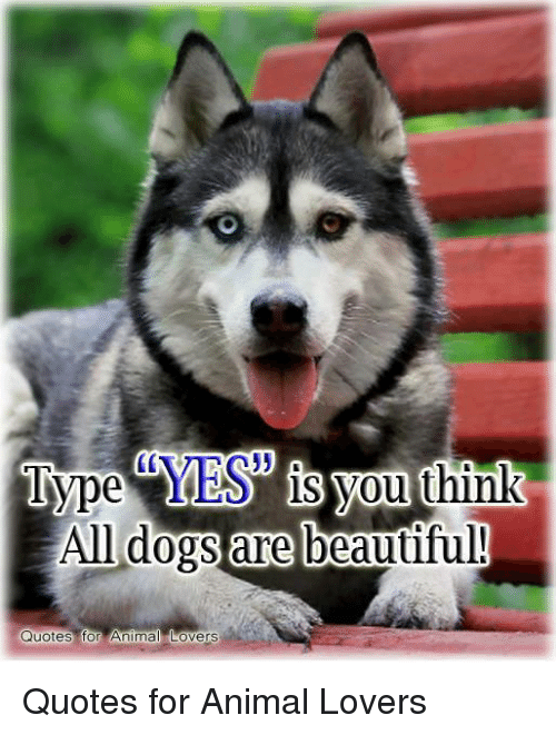 animal lover: YES Syou think  ype  Alldogs are  beautiful!  Quotes for Animal Lovers Quotes for Animal Lovers