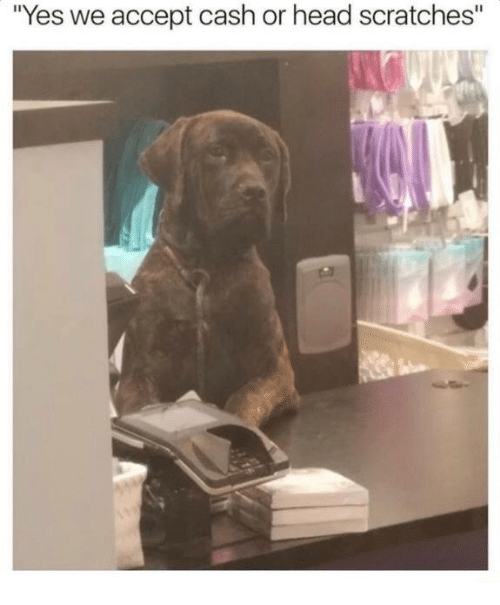"Head, Humans of Tumblr, and Yes: ""Yes we accept cash or head scratches"""