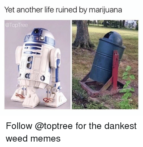 Dankest Weed: Yet another life ruined by marijuana  Top Tree Follow @toptree for the dankest weed memes