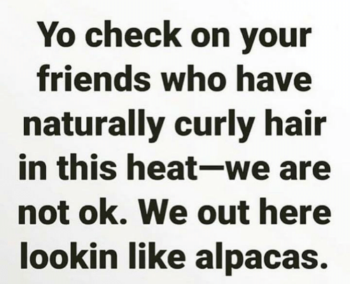 curly hair: Yo check on your  friends who have  naturally curly hair  in this heat-we are  not ok. We out here  lookin like alpacas.
