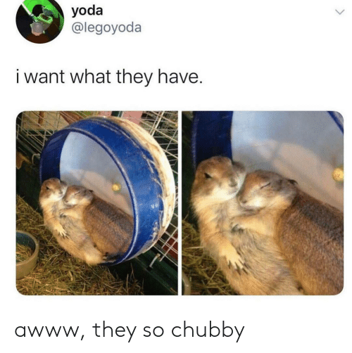 chubby: yoda  @legoyoda  i want what they have. awww, they so chubby