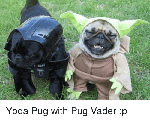 Pug Dog Pictures