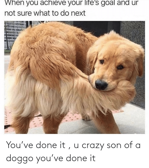 doggo: You've done it , u crazy son of a doggo you've done it