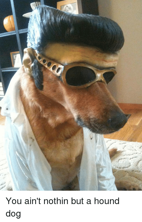 Elvis Presley: You ain't nothin but a hound dog