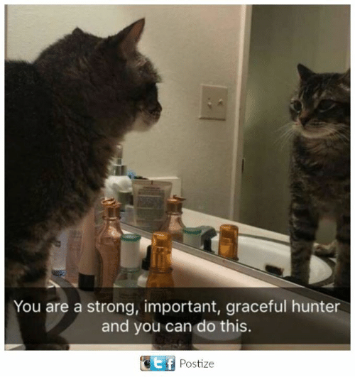 Memes, Strong, and 🤖: You are a strong, important, graceful hunter  and you can do this.  Ef