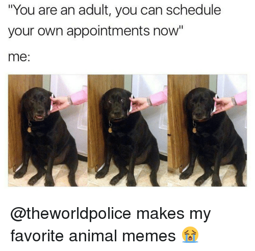 """Animals Meme: """"You are an adult, you can schedule  your own appointments now""""  me @theworldpolice makes my favorite animal memes 😭"""