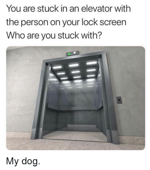 Memes, 🤖, and Dog: You are stuck in an elevator with  the person on your lock screen  Who are you stuck with? My dog.