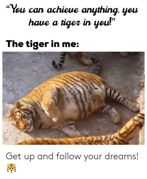 """Follow Your Dreams: """"You can achieue anything. yeu  (C  haue a tiger irn  The tiger in me Get up and follow your dreams! 🐯"""