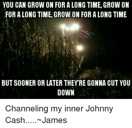 Johnny Cash, Time, and Farming: YOU CAN GROW ON FOR ALONG TIME, GROW ON  FOR ALONG TIME, GROWON FOR A LONG TIME  BUT SOONER OR LATER THEY RE GONNA CUT YOU  DOWN Channeling my inner Johnny Cash.....~James