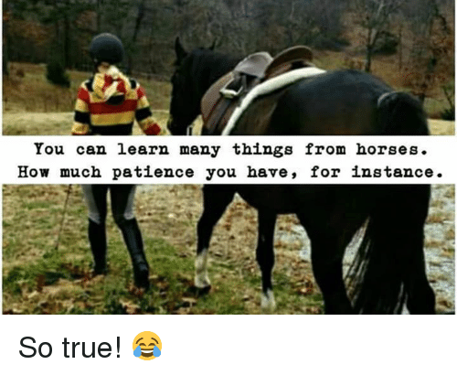 Horses, Memes, and True: You can learn many things from horses.  How much patience you have, for instance. So true! 😂