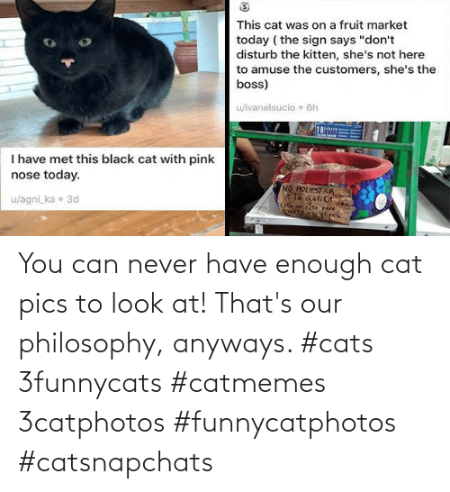 To Look: You can never have enough cat pics to look at! That's our philosophy, anyways. #cats 3funnycats #catmemes 3catphotos #funnycatphotos #catsnapchats