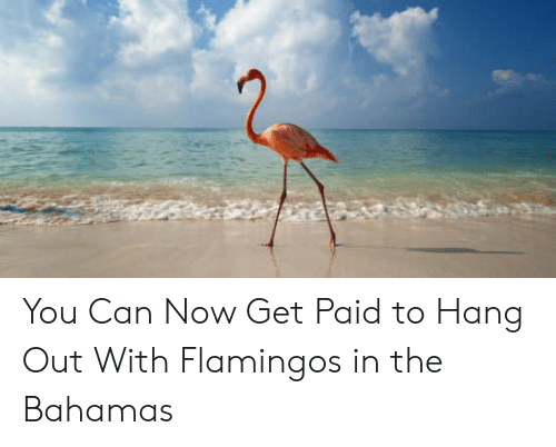 the bahamas: You Can Now Get Paid to Hang Out With Flamingos in the Bahamas