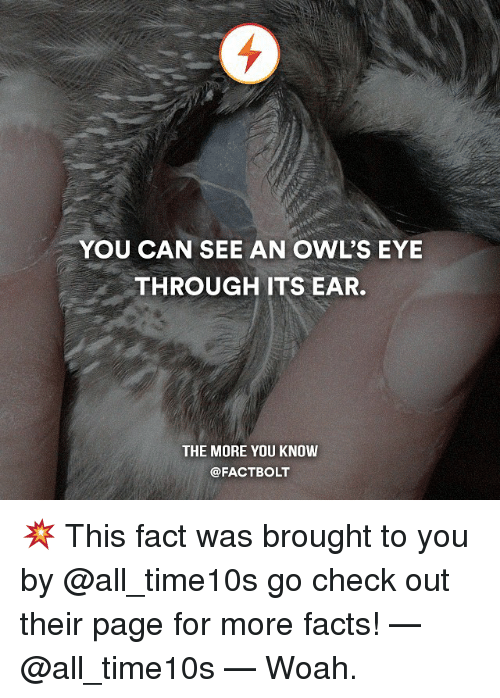 Facts, Memes, and The More You Know: YOU CAN SEE AN OWL'S EYE  THROUGH ITS EAR.  THE MORE YOU KNOW  @FACTBOLT 💥 This fact was brought to you by @all_time10s go check out their page for more facts! — @all_time10s — Woah.