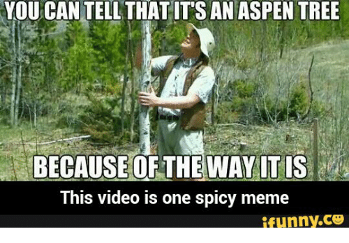 You Can Tell Its An Aspen: YOU CAN TELL THAT ITS AN ASPEN TREE  BECAUSE OF THE WAY IT IS  This video is one spicy meme  ifunny.c3
