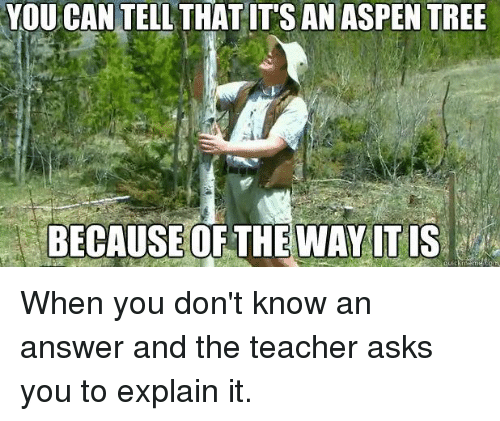 aspen tree: YOU CAN TELL THAT ITS AN ASPEN TREE  BECAUSE OF THE WAY ITIS When you don't know an answer and the teacher asks you to explain it.