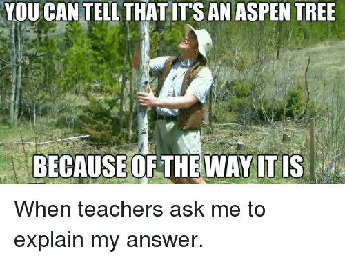 aspen tree: YOU CAN TELL THAT ITS AN ASPEN TREE  BECAUSE OF THE WAY IT IS  etamu When teachers ask me to explain my answer.