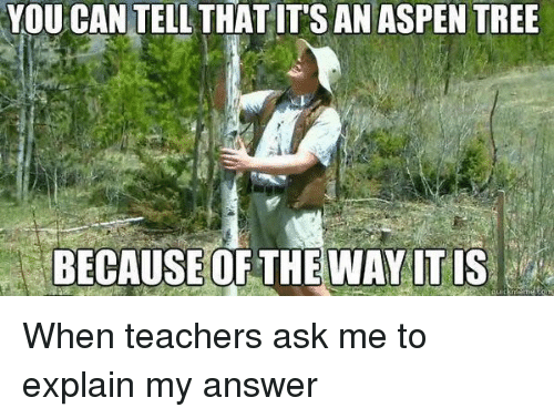 aspen tree: YOU CAN TELL THATIT'S AN ASPEN TREE  BECAUSE OF THE WAY ITIS When teachers ask me to explain my answer
