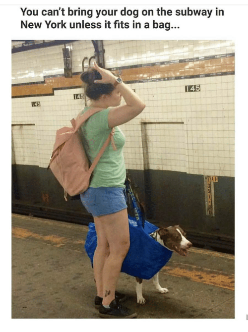 You can 39 t bring your dog on the subway in new york unless for Can you take jewelry in your carry on baggage