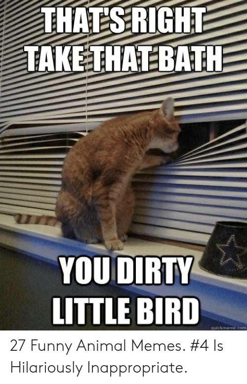Hilariously Inappropriate: YOU DIRTY  LITTLE BIRD  quickmeme.com 27 Funny Animal Memes. #4 Is Hilariously Inappropriate.
