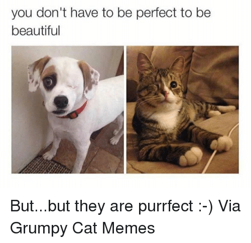 Grumpy Cats: you don't have to be perfect to be  beautiful But...but they are purrfect :-) Via Grumpy Cat Memes