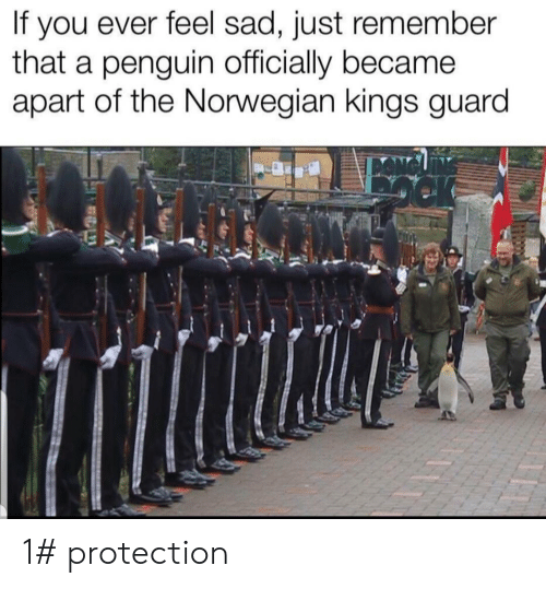 Just Remember: you ever feel sad, just remember  that a penguin officially became  apart of the Norwegian kings guard  If 1# protection