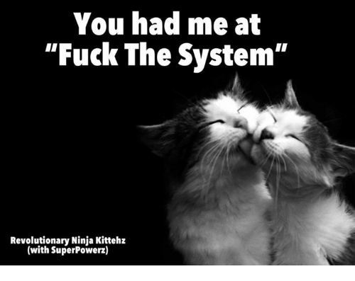 you-had-me-at-fuck-the-system-revolutionary-ninja-kittehz-25276134.png