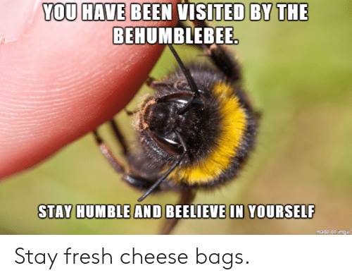 Stay Humble: YOU HAVE BEEN VISITED BY THE  BEHUMBLEBEE  STAY HUMBLE AND BEELIEVE IN YOURSELF  made on imqur Stay fresh cheese bags.