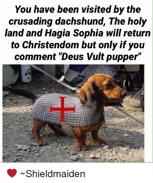 """deus vult: You have been visited by the  crusading dachshund, The holy  land and Hagia Sophia will return  to Christendom but only if you  comment """"Deus Vult pupper"""" ❤️ ~Shieldmaiden"""
