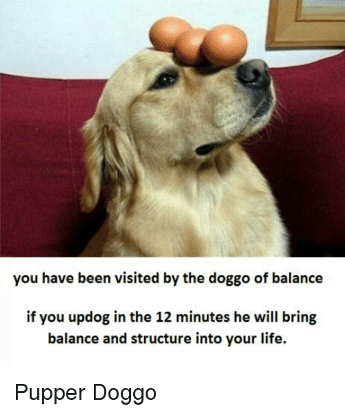 Pupper Doggo: you have been visited by the doggo of balance  if you updog in the 12 minutes he will bring  balance and structure into your life. Pupper Doggo
