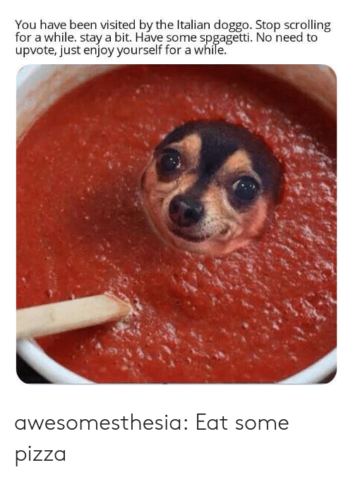 Just Enjoy: You have been visited by the Italian doggo. Stop scrolling  for a while. stay a bit. Have some spgagetti. No need to  upvote, just enjoy yourself for a while. awesomesthesia:  Eat some pizza