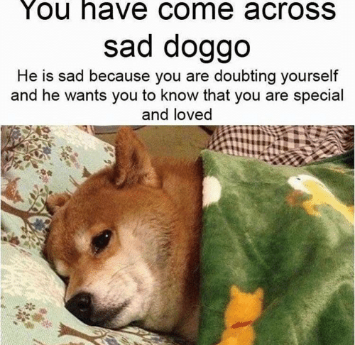 you are special: You have come acrosS  sad doggo  He is sad because you are doubting yourself  and he wants you to know that you are special  and loved