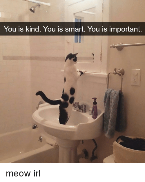 Cat IRL, Smart, and Meow: You is kind. You is smart. You is important meow irl